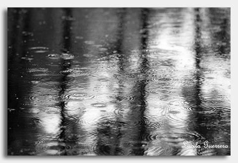 Pluie sur la flaque