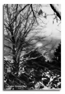 naturemono-49-320-px