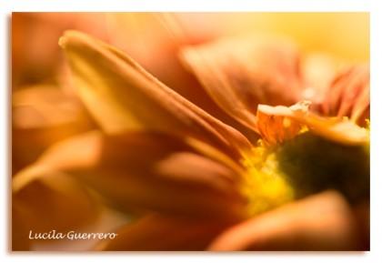 fleurs-35-400-px